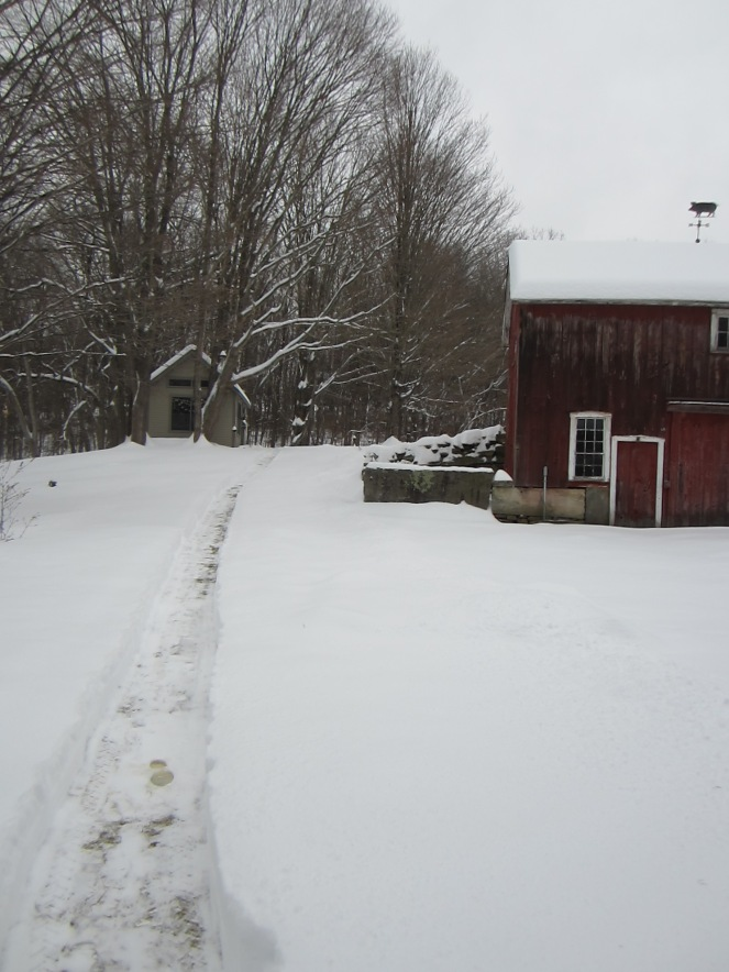 Instead of following the yellow brick road, I followed the freshly cleared path, to...