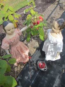Next the two young dolls headed over to the other garden to pick raspberries...