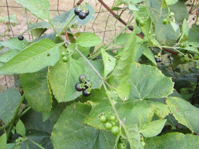 huckleberries www.izannahwalker.com