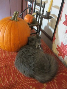 """""""Poor Sadie! She's sad because she doesn't have a costume too !"""""""