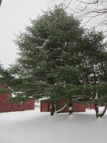 The ultimate Christmas tree?